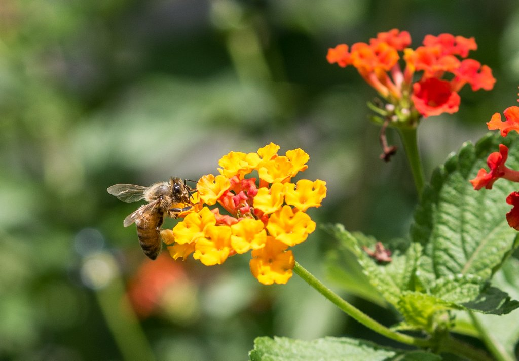 Name:  Bee time.jpg