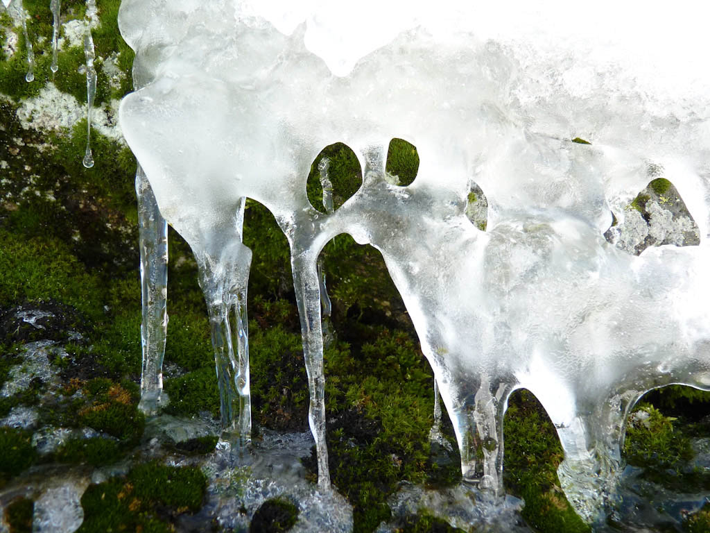 Name:  Ice and Moss-2.jpg Views: 245 Size:  204.5 KB
