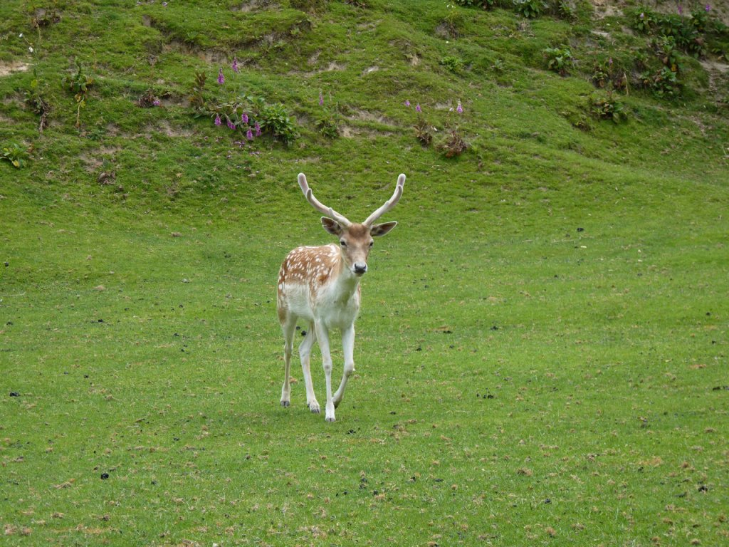 Name:  cerf.jpg
