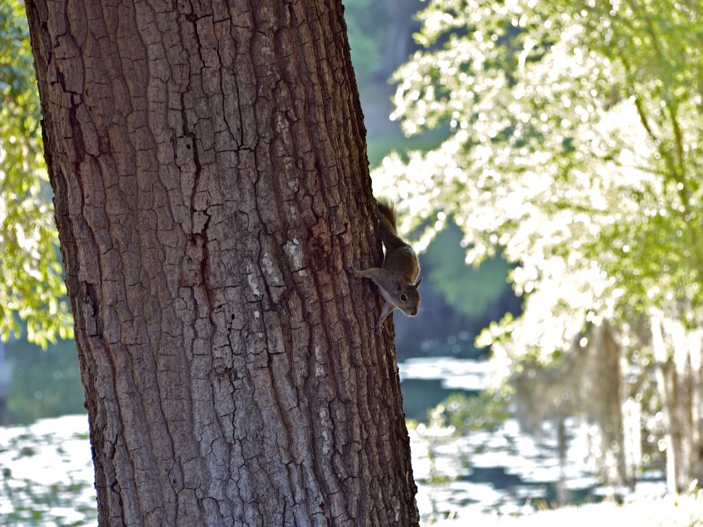 Name:  Squirreled uncropped 014.jpg Views: 360 Size:  195.5 KB